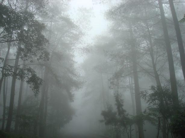 kabut di hutan Tangkuban Perahu