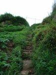 jalur trekking Sikunir