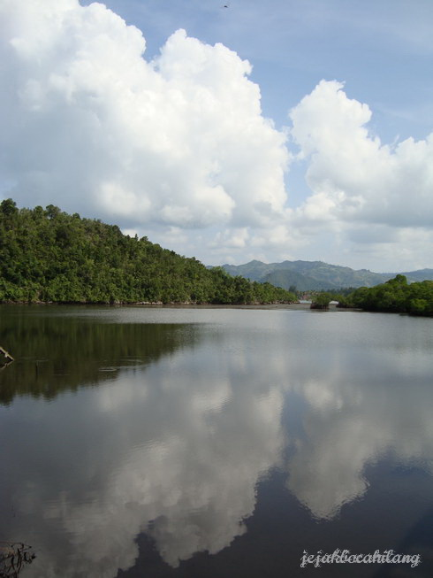 hutan bakau Hamadi