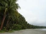 jajaran kelapa