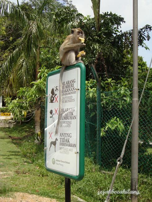 monyet nangkring di papan