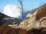 melintasi keindahan alam Gunung Ijen