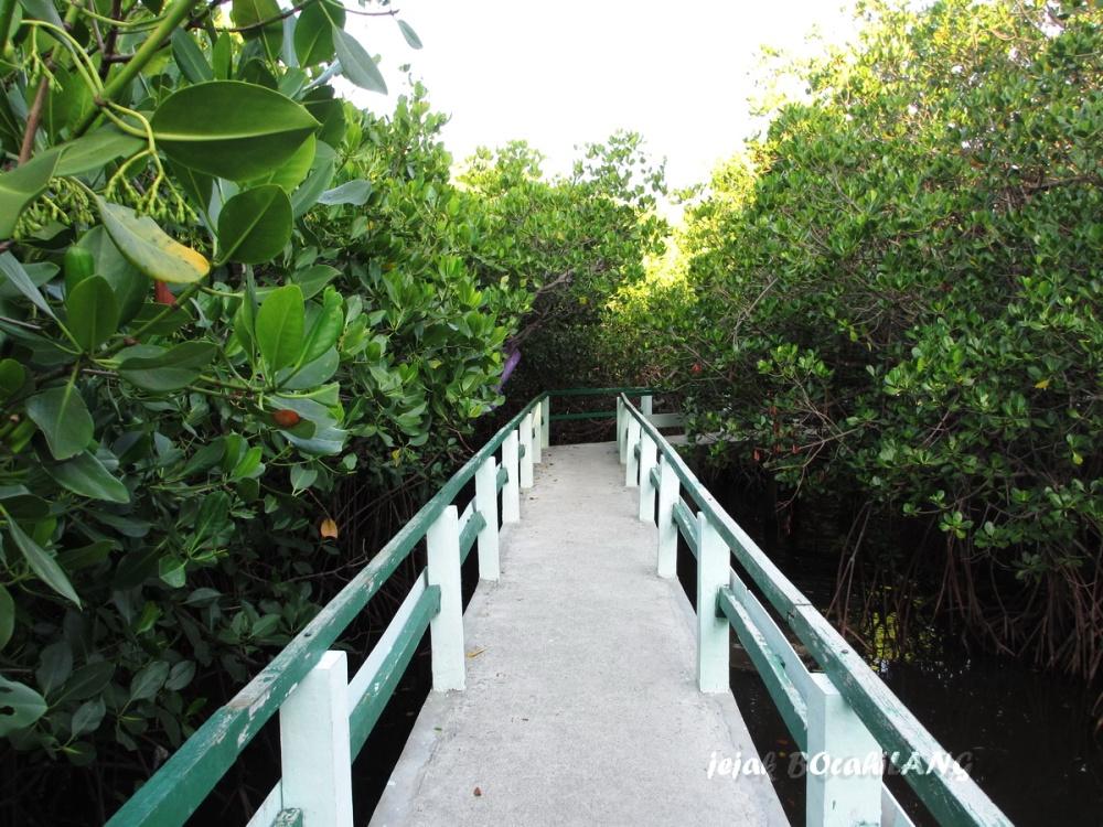 mangrove TN Baluran