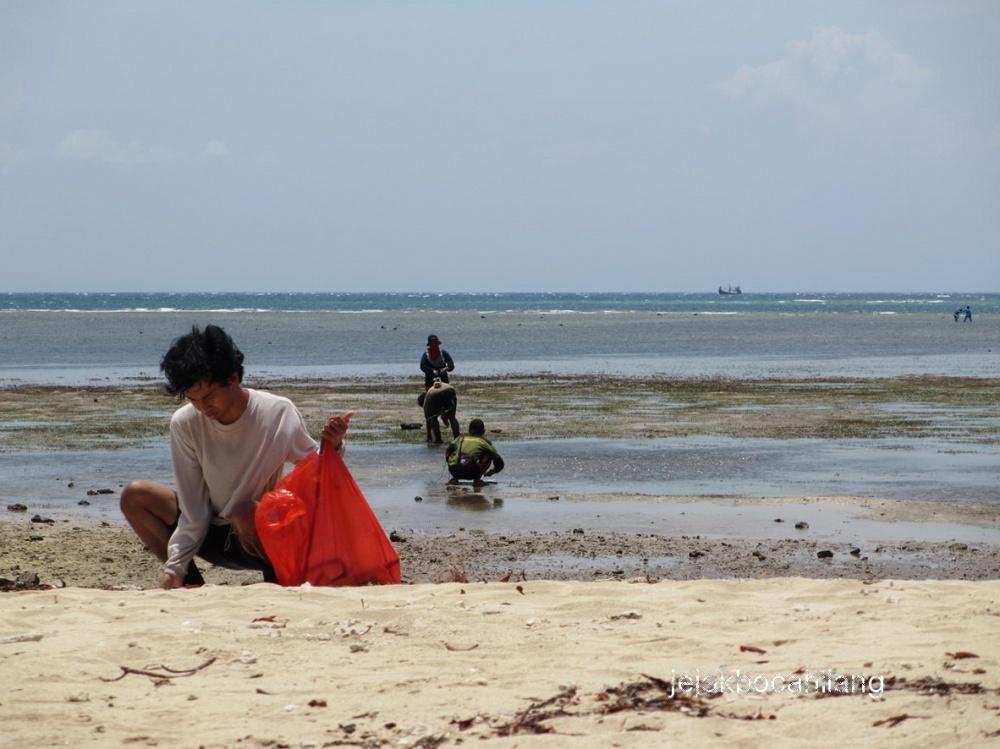 pendataan konservasi tahunan Pantai Bama