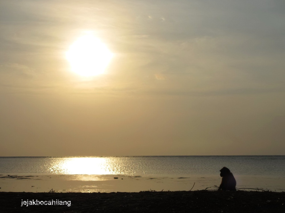 monyet unyu pun ikut menikmati matahari pagi