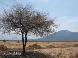 Taman Nnasional Baluran