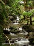 sungai di Jumog yang masih alami