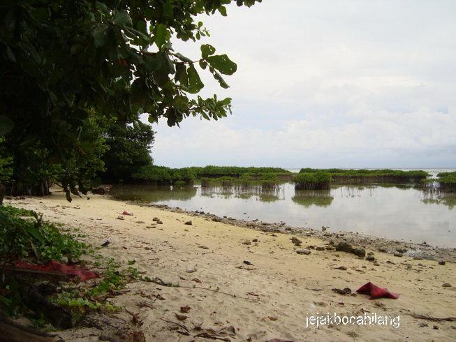 """""""mangrove"""" Pulau Pramuka"""
