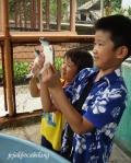 penyu sisik di Pramuka