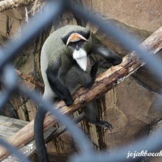 primata di Batu Secret Zoo