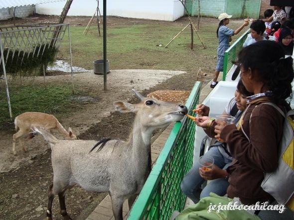 suasana di Safari Farm