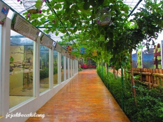 Eco Green Park - Parrot Dunia