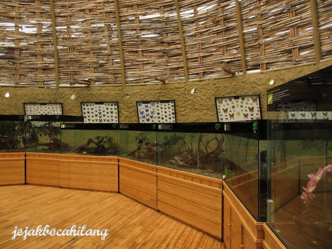 rumah para serangga hidup