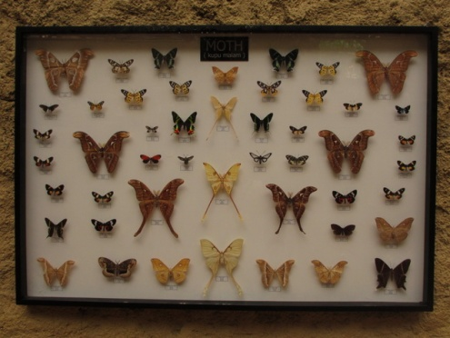 koleksi kupu-kupu Eco Green Park