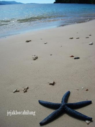 bintang laut di pantai