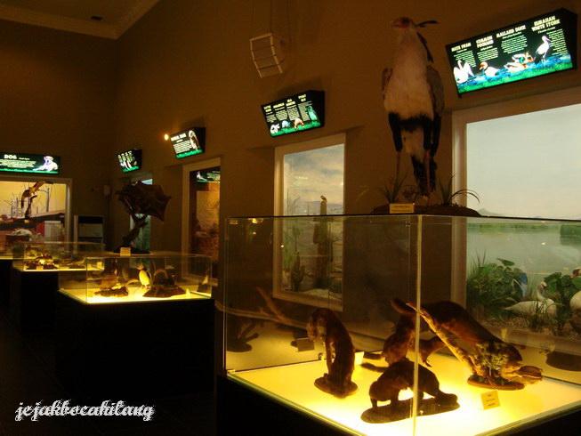 display di Museum Satwa