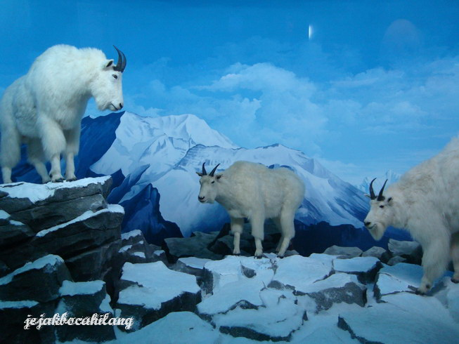 hewan binatang kutub
