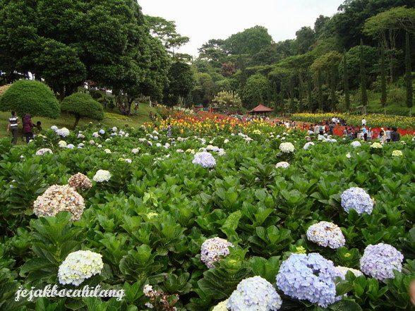 Taman Bunga di Selekta