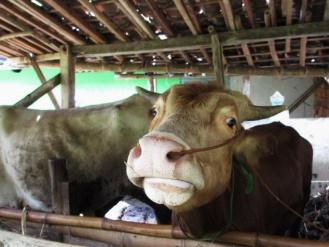 sambutan di Dusun Melati Selogiri