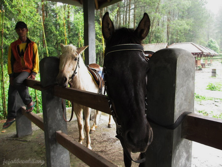 kuda di Gedong Songo