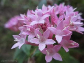 beautiful flower in backyard