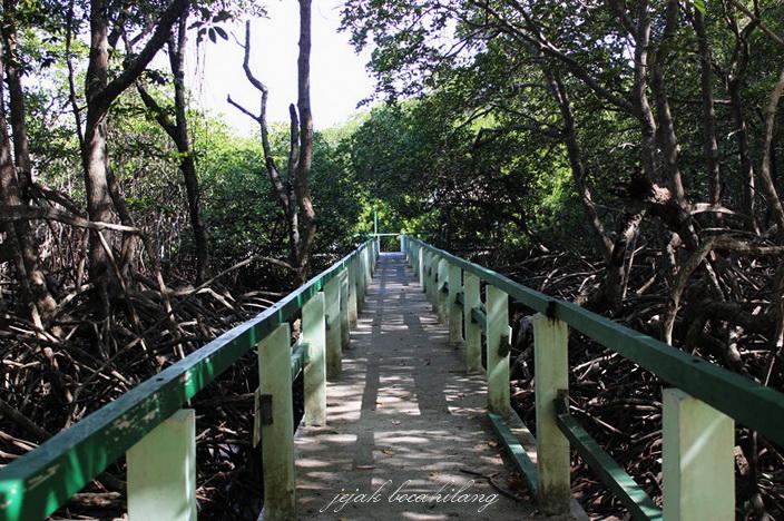 hutan bakau Pantai Bama