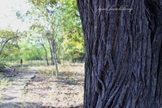 pohon sepanjang jalur trek