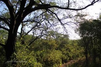 hutan Curah Udang