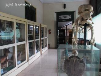 Museum Biologi