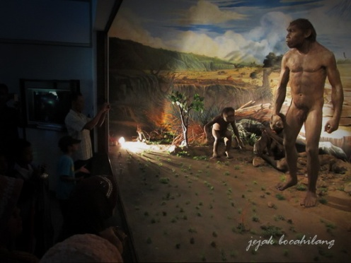 homo erecturs Museum Sangiran
