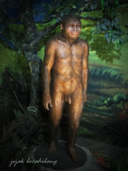 Homo Erectus Sangiran
