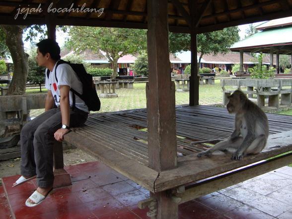 human vs monkey