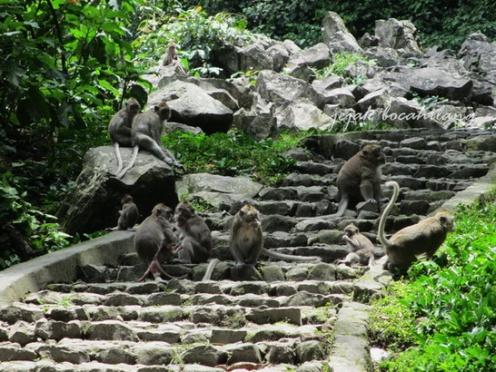 jajaran monyet di Grojogan Sewu