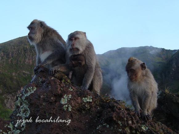 primata Gunung Batur