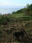 penghuni bukit Uluwatu