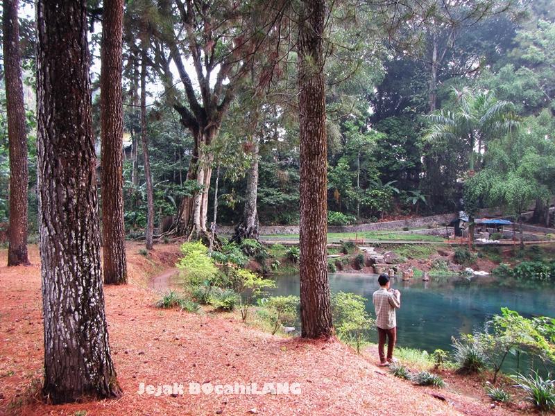 hutan pinus di Rambut Monte