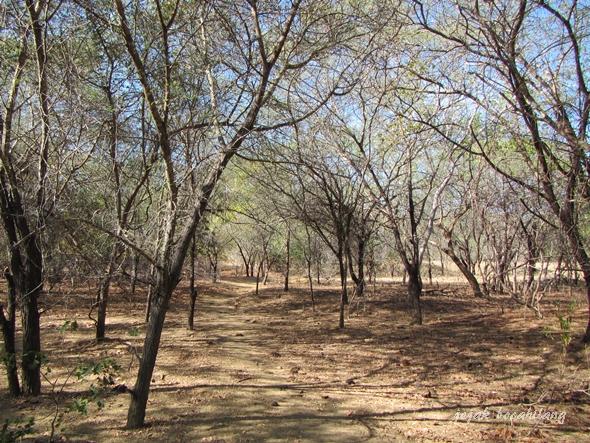 jalur mblusuk hutan