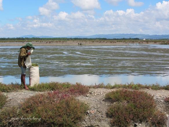 ladang garam di Kalianget yang masih belum siap panen