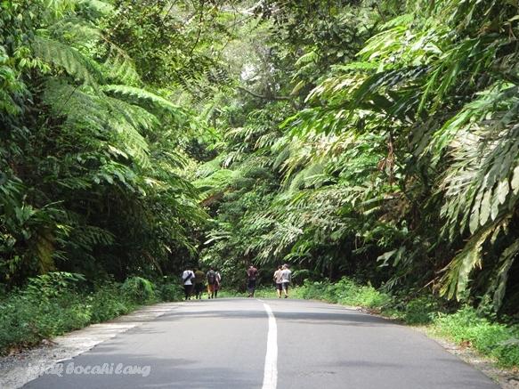 hutan di Taman Nasional Bukit Barisan Selatan