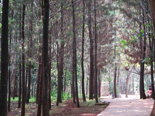 Hutan Kota BSD