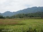 pemandangan menuju Desa Nglipoh