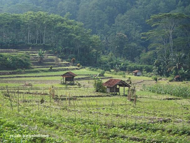 Desa Dermaji - Banyumas