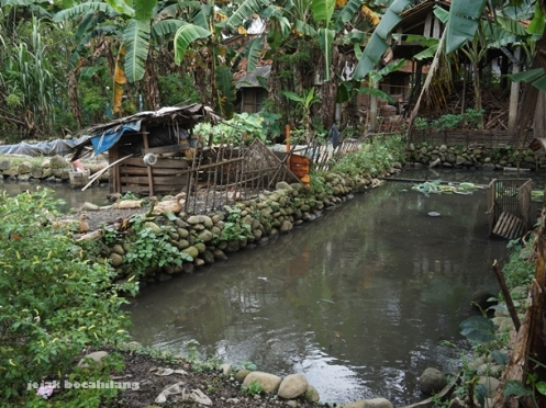 hasil saringan akhir air limbah yang dialirkan ke kolam milik warga Desa Kalisari