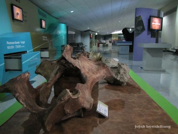 fosil hewan purba di Klaster Dayu