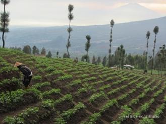 aktivitas petani di Lembah Posong