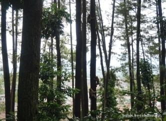 monyet ekor panjang di Gunung Tidar