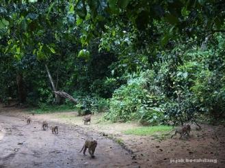 Hutan Kera Nepa