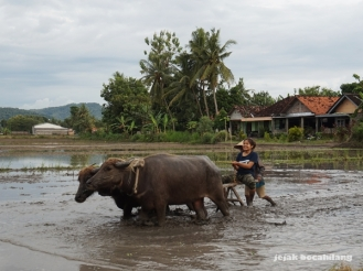 aktivitas Desa Wisata Kebonagung