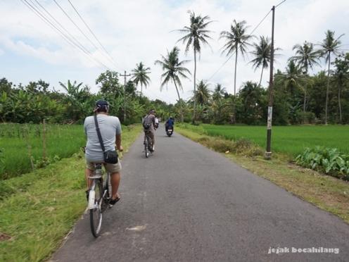 bersepeda melewati persawahan Moyudan