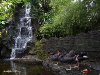 waterfall Gembira Loka Zoo